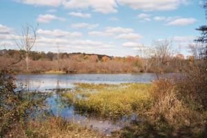 Flood Control Landscape